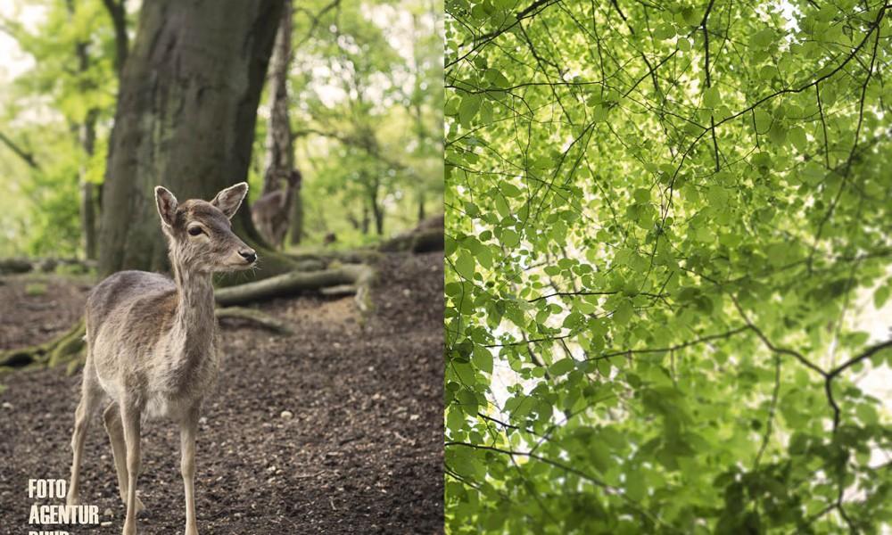 Leiser Gruß aus dem Wald